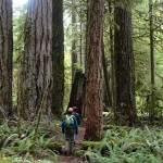 Go With a Guide on Vancouver Island