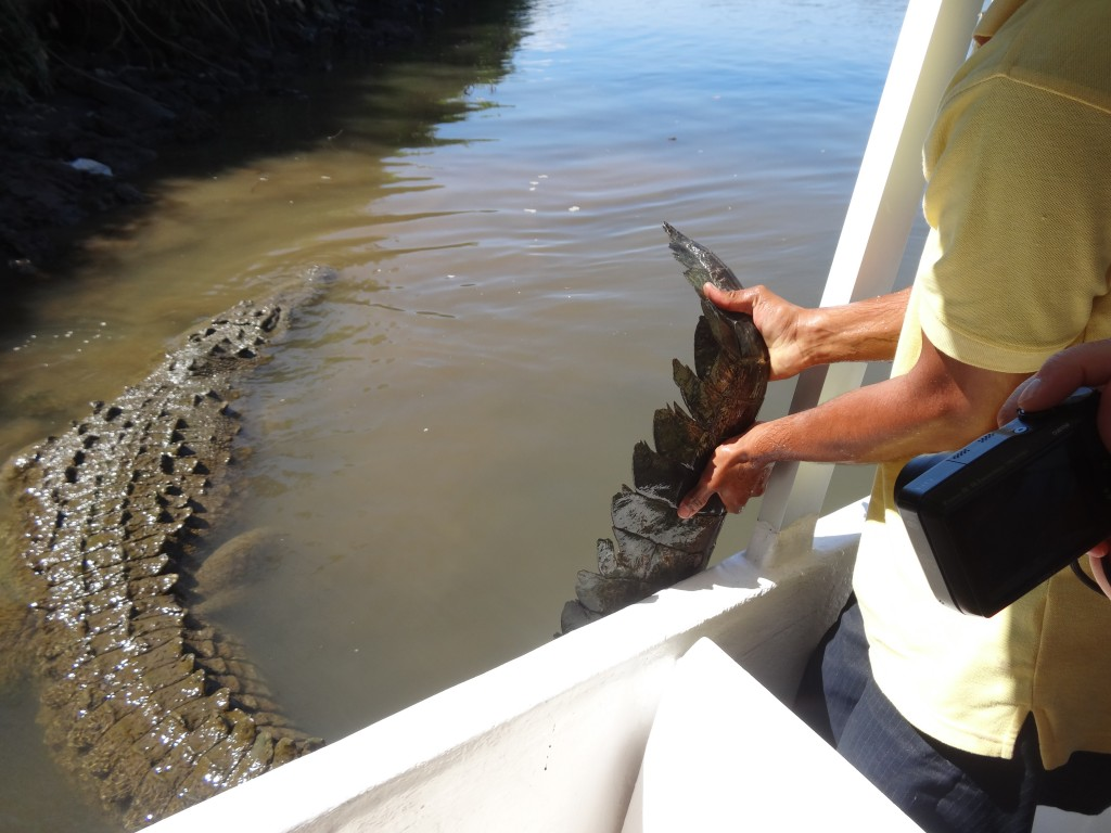 Visitors get a chance to see a crocodile tail up-close